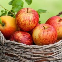 Експорт українських яблук зріс