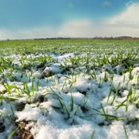 Current year losses of winter crops are record low over the past decade